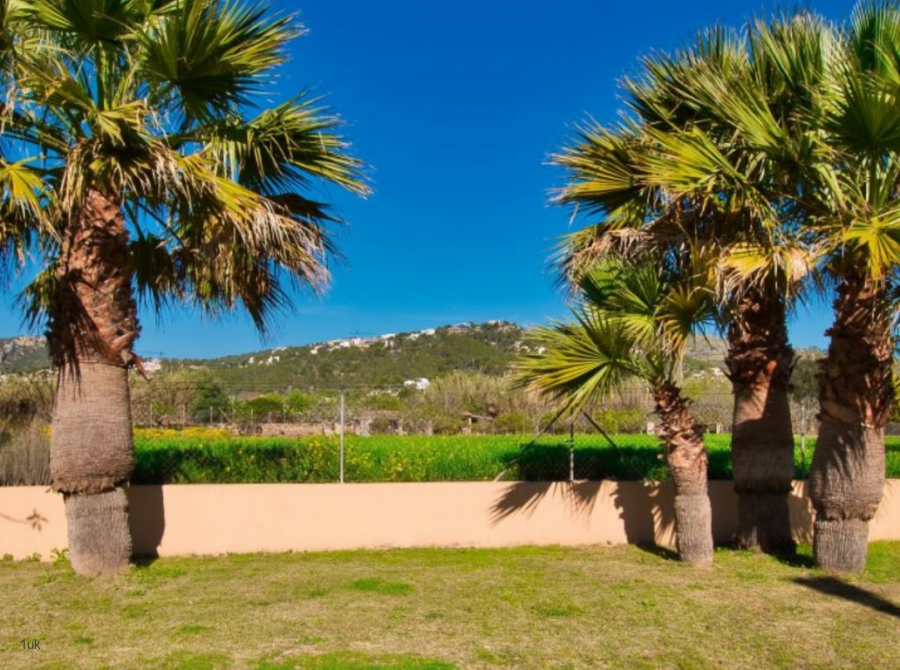 Beautiful gardens with palm trees surround the property